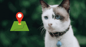 Best GPS for cats